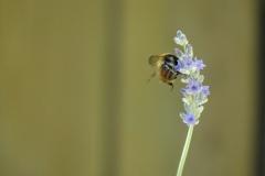 La faune et la flore à Millefeuille Provence