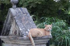Un des chats de Millefeuille Provence