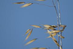Une branche au vent