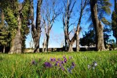 Les violettes du jardin