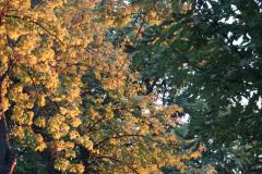 Les arbres du parc de Millefeuille Provence